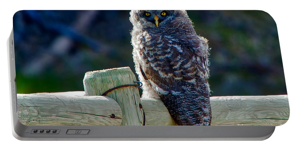 Great Grey Owl Portable Battery Charger featuring the photograph Intense Stare by James Anderson