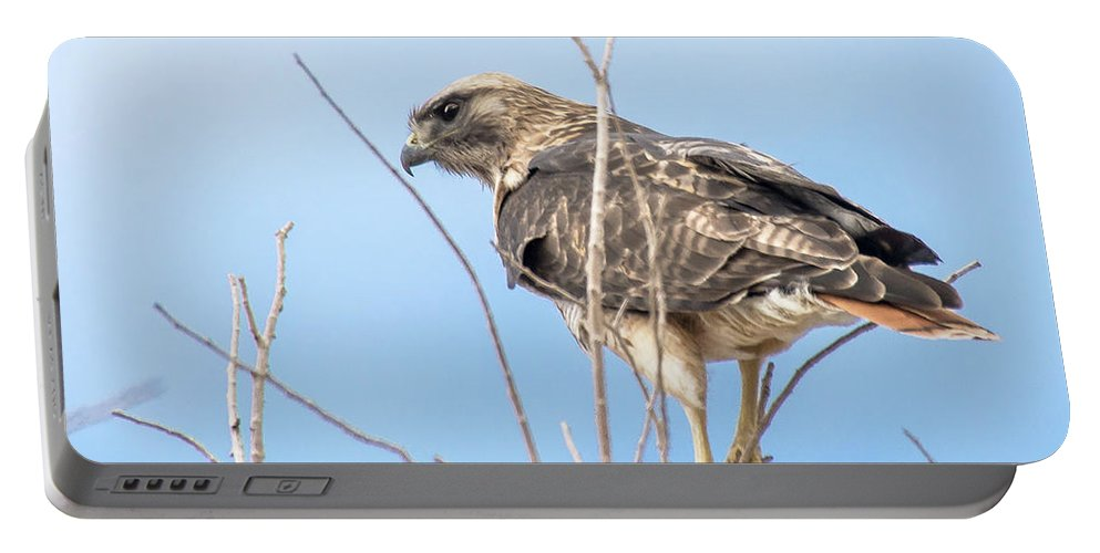 Imported Keyword Tags Portable Battery Charger featuring the photograph Intensity by John Bartelt