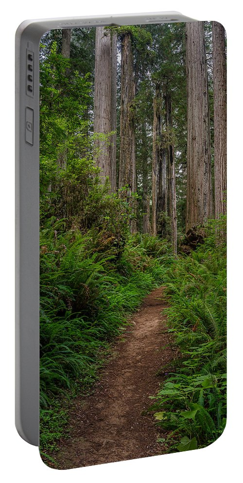 Redwoods Portable Battery Charger featuring the photograph Into The Redwoods by Greg Nyquist