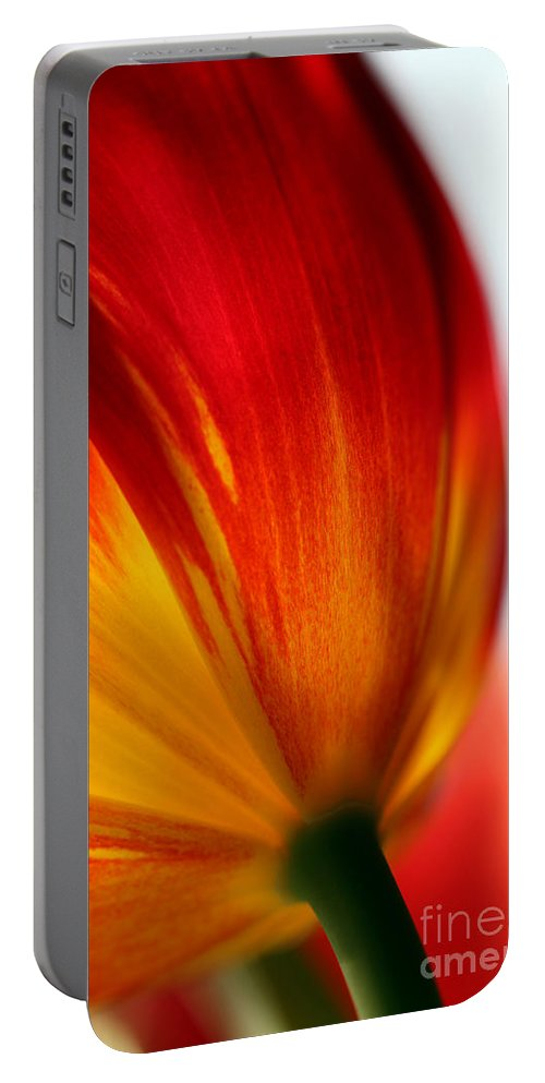 Tulip Portable Battery Charger featuring the photograph Introverted by Amanda Barcon