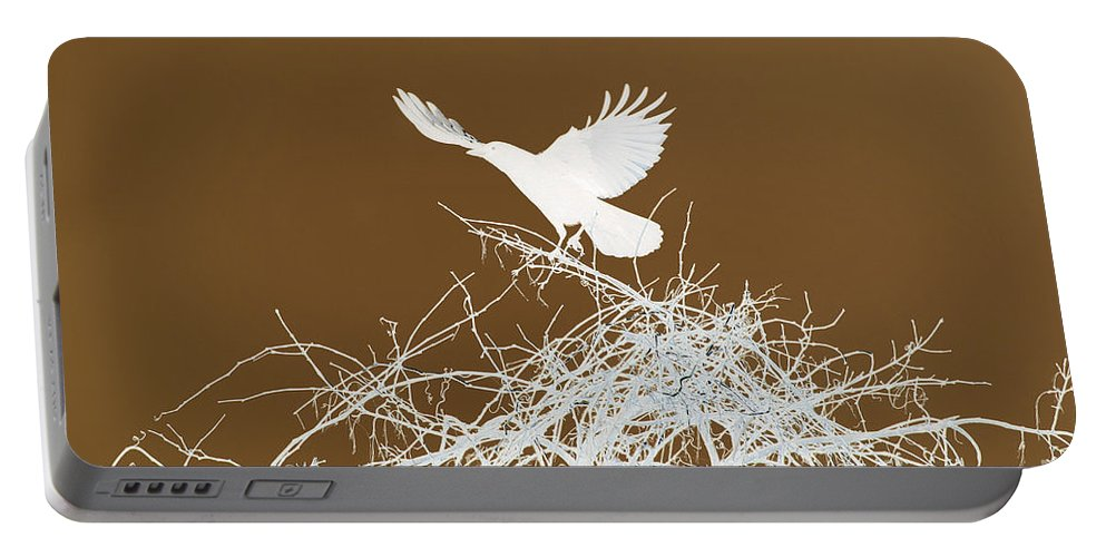 Bird Portable Battery Charger featuring the photograph Inverted Crow by Deborah Benoit