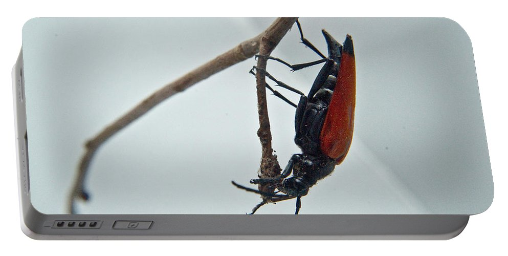 Investigating Portable Battery Charger featuring the photograph Investigating A Bud by Douglas Barnett