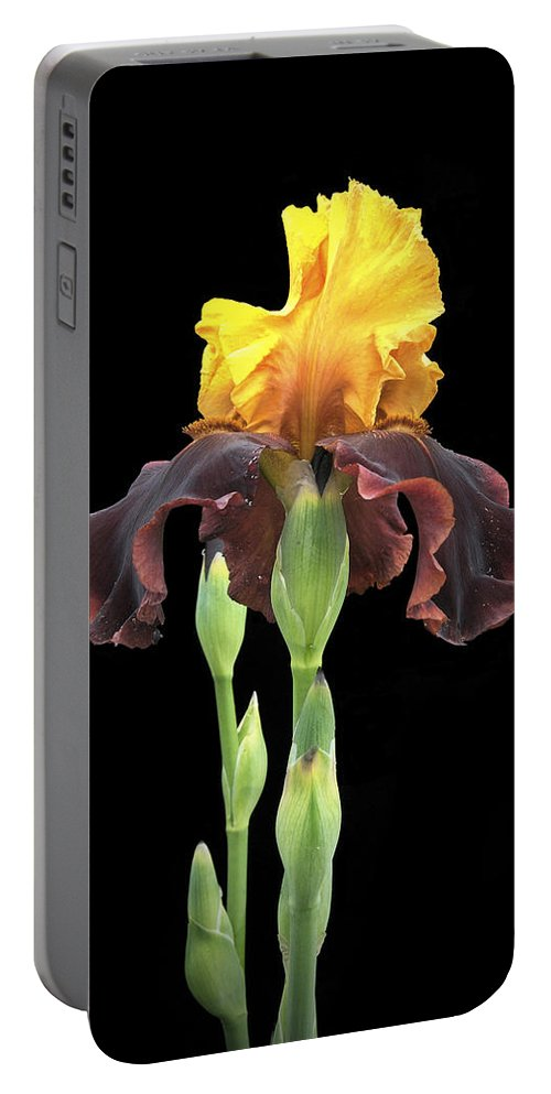 Flower Portable Battery Charger featuring the photograph Iris 3 by Michael Peychich