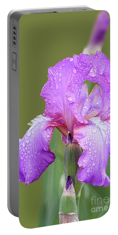 Lavender Iris Portable Battery Charger featuring the photograph Iris In Summer Rain by Regina Geoghan