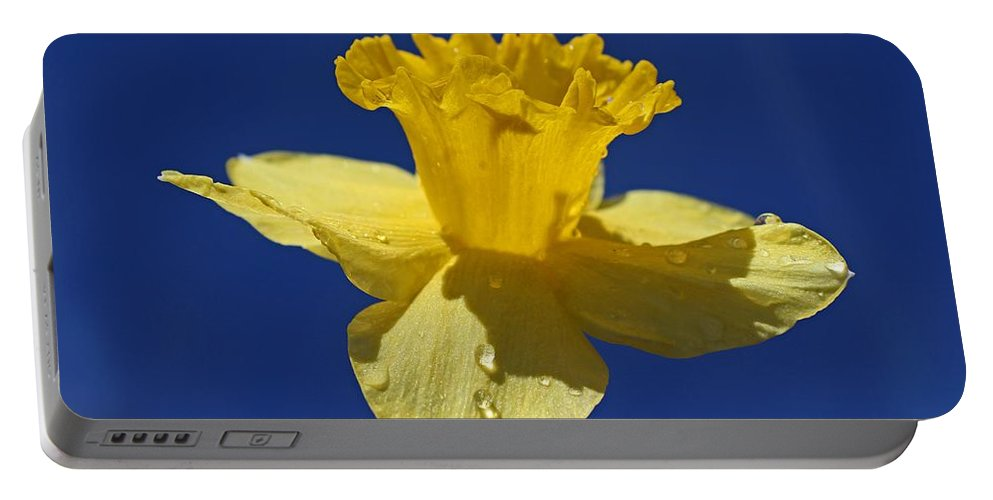 Daffodil Portable Battery Charger featuring the photograph Irresistible Attraction by Michiale Schneider