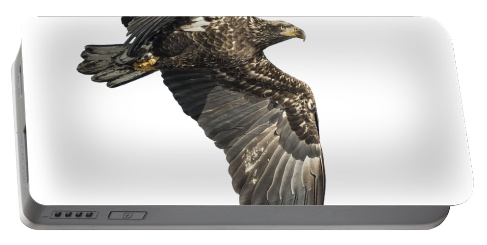American Bald Eagle Portable Battery Charger featuring the photograph Isolated Eagle 2017-2 by Thomas Young