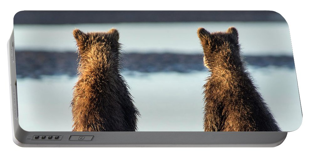 Grizzly Bear Portable Battery Charger featuring the photograph It's A Big World Out There by Claudia Kuhn