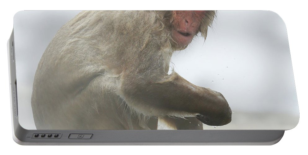 Snow Monkeys Portable Battery Charger featuring the photograph It's Way Too Cold by Leigh Lofgren