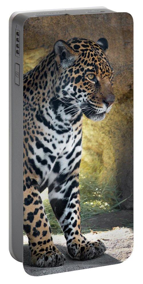 Jaguar Portable Battery Charger featuring the photograph Jaguar At Rest by Steven Jones
