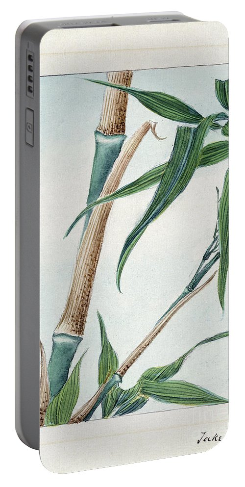 1870s Portable Battery Charger featuring the photograph Japan: Bamboo, C1870s by Granger
