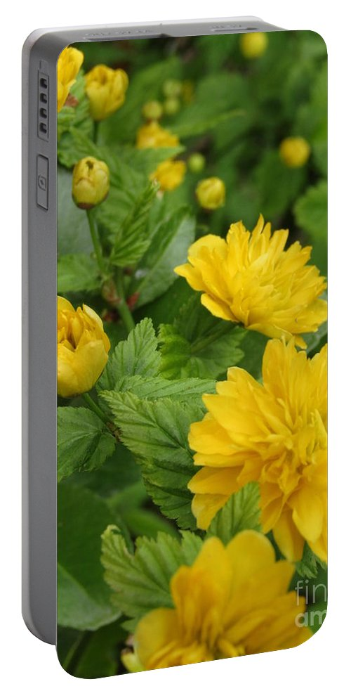 Kerria Japonica Portable Battery Charger featuring the photograph Japanese Kerria 1 by Kim Tran
