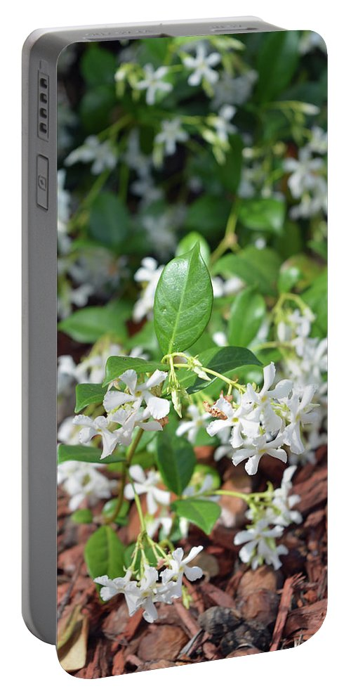 Jasmine Portable Battery Charger featuring the photograph Jasmine In Bloom by Aimee L Maher ALM GALLERY