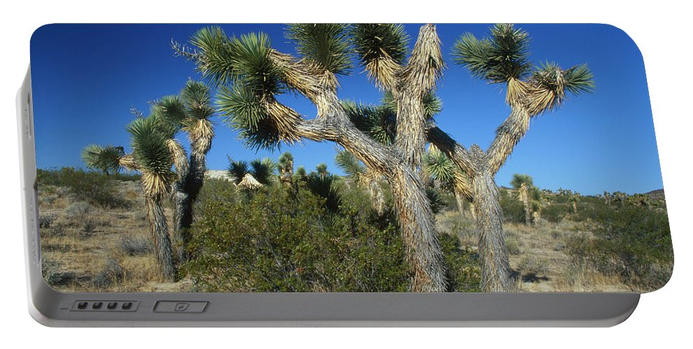 Joshua Trees Portable Battery Charger featuring the photograph Joshua Trees by Soli Deo Gloria Wilderness And Wildlife Photography