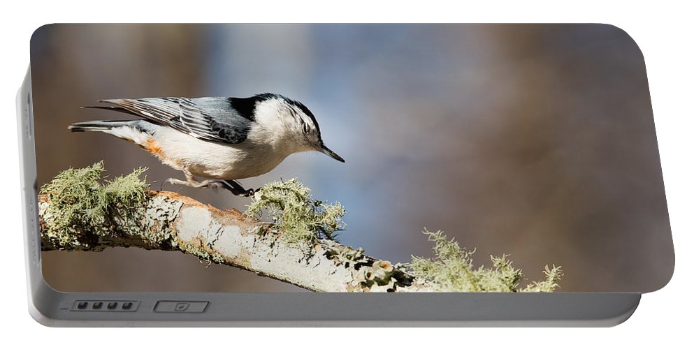 Bird Portable Battery Charger featuring the photograph Jump - White-breasted Nuthatch by Christy Cox