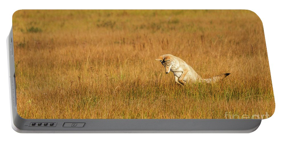 Nature Portable Battery Charger featuring the photograph Jumping Coyote by Mirko Chianucci