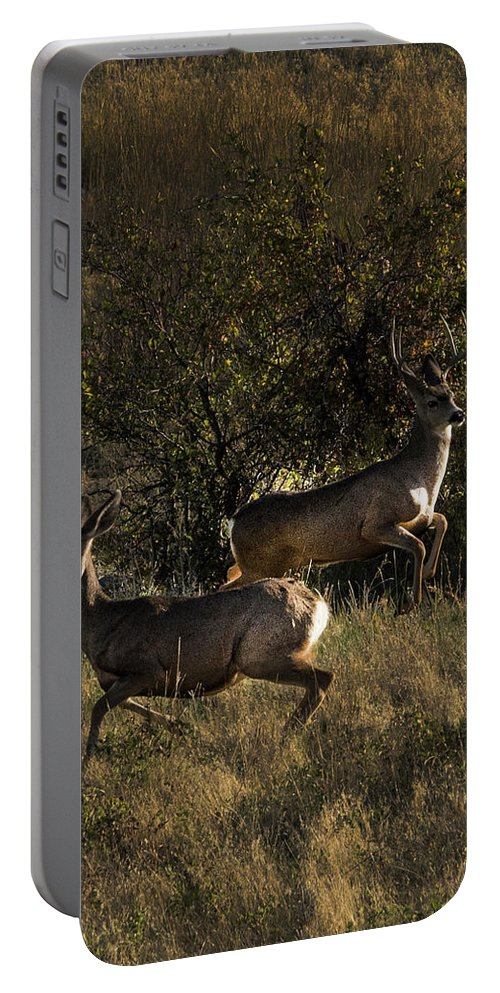 Deer Portable Battery Charger featuring the photograph Jumping deer by Roy Nierdieck
