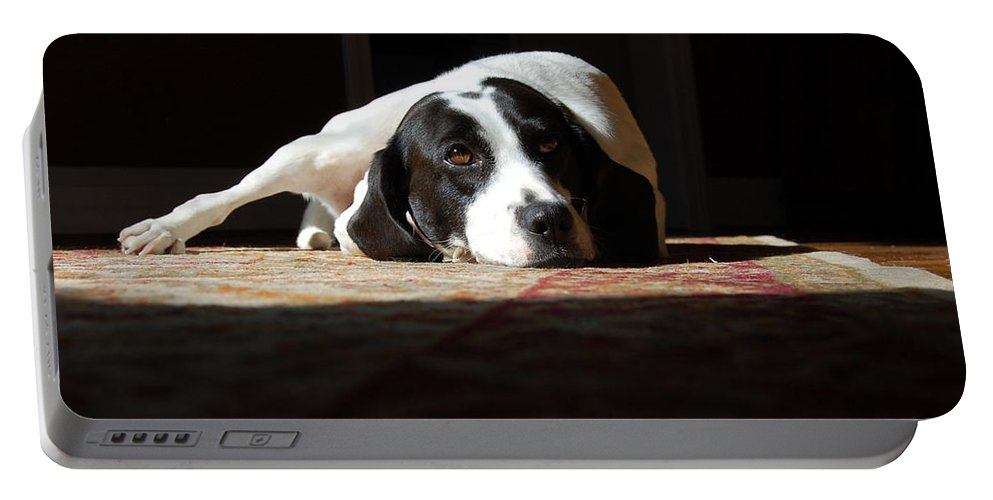 Dogs.animal Portable Battery Charger featuring the photograph Junebug by Robert Meanor