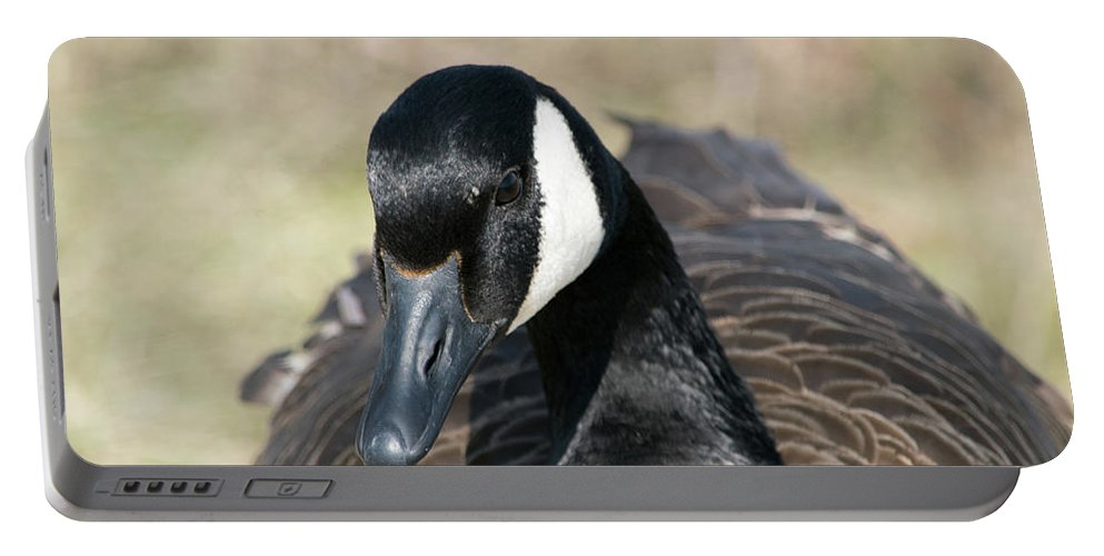 Nature Portable Battery Charger featuring the photograph Just A Goose by Deborah McCoig