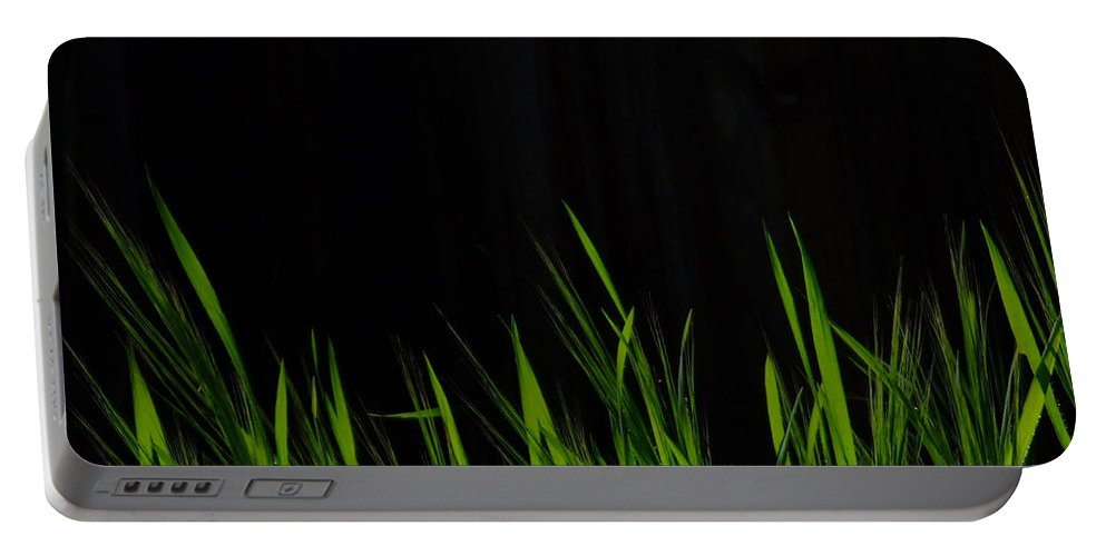 Grass Portable Battery Charger featuring the photograph Just A Little Grass by Donna Blackhall
