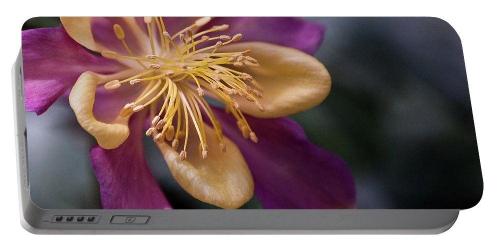 Yellow Portable Battery Charger featuring the photograph Just A Pretty Flower by Trish Tritz