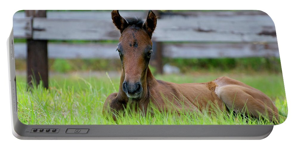 Andalusian Portable Battery Charger featuring the photograph Just Born by Francine Hall