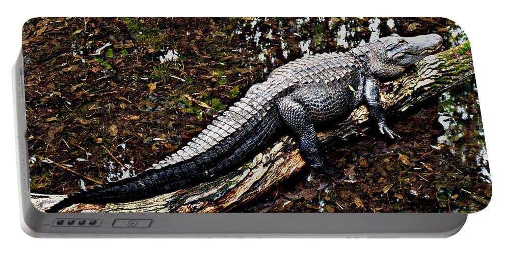 Florida Portable Battery Charger featuring the photograph Just Hanging Out by Bob Johnson