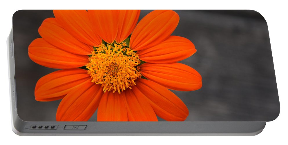 Flower Portable Battery Charger featuring the photograph Just Hanging Out by Maria Keady