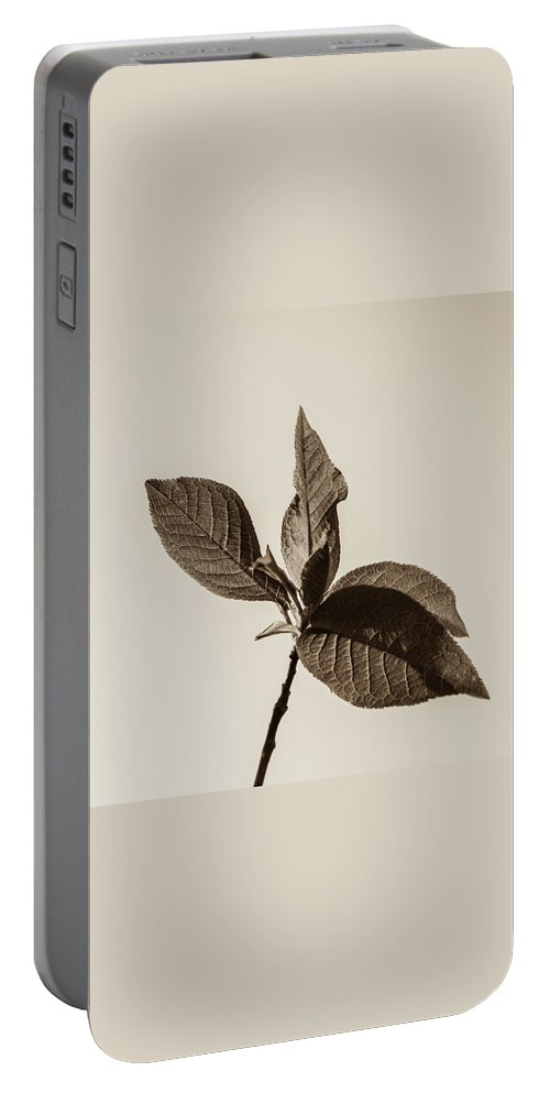 Just Leaves Portable Battery Charger featuring the photograph Just Leaves by Yana Reint