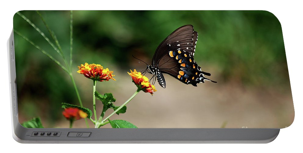 Swallowtail Portable Battery Charger featuring the photograph Just Me And My Flower by Lori Tambakis