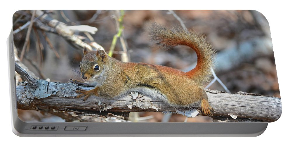 Red Squirrel Portable Battery Charger featuring the photograph Just Relaxing by Susan Ballard