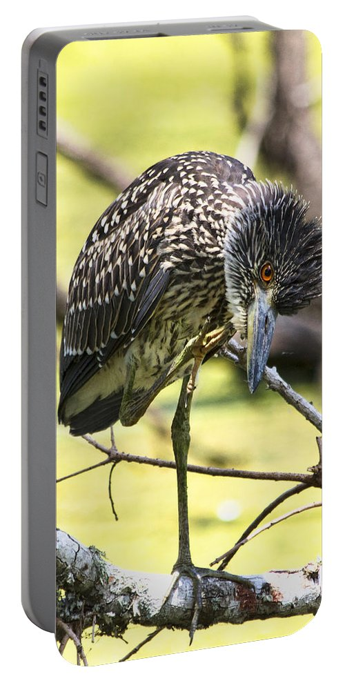 Black Crowned Night Heron Portable Battery Charger featuring the photograph Juvenile Black Crowned Night Heron by TN Fairey