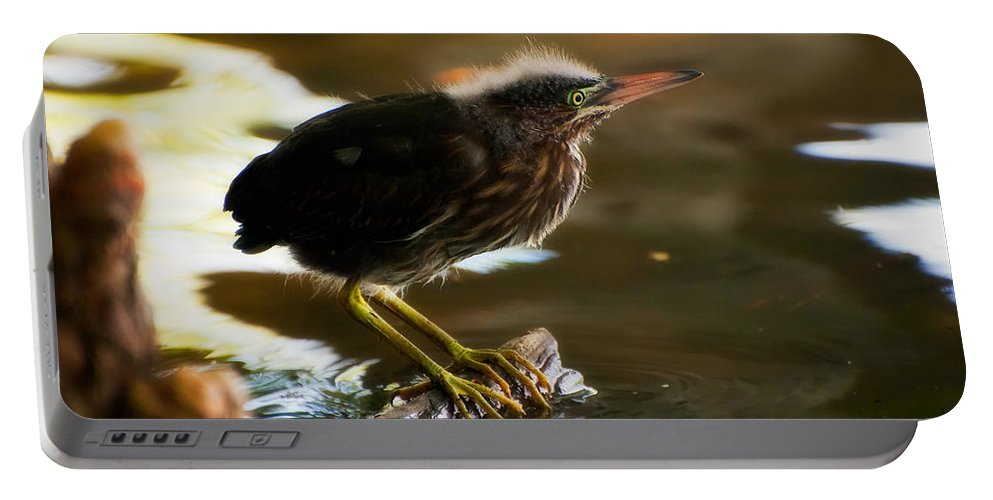 Animal Portable Battery Charger featuring the photograph Juvenile Green Heron by Rich Leighton
