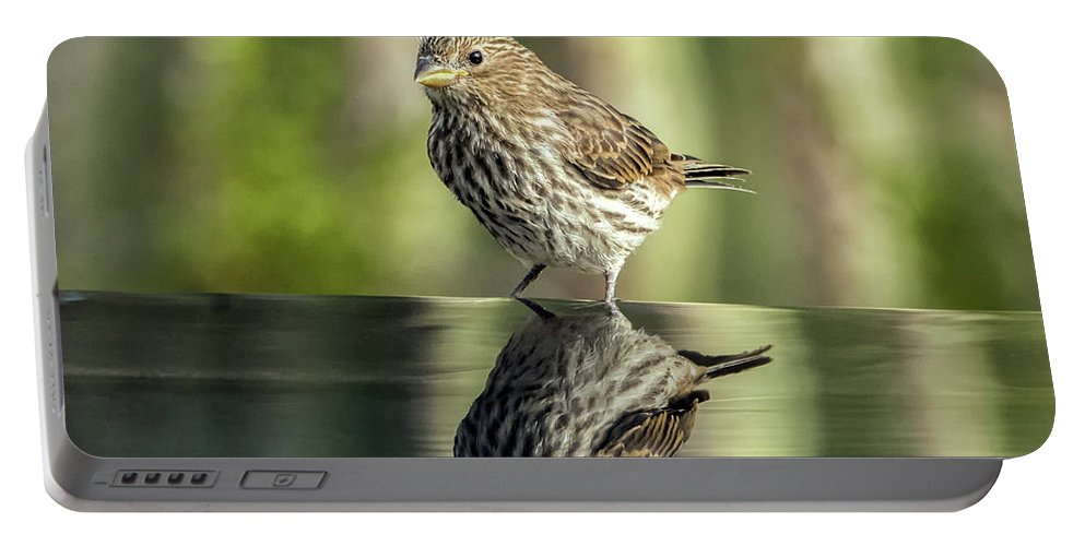 House Portable Battery Charger featuring the photograph Juvenile House Sparrow 0689 by Tam Ryan
