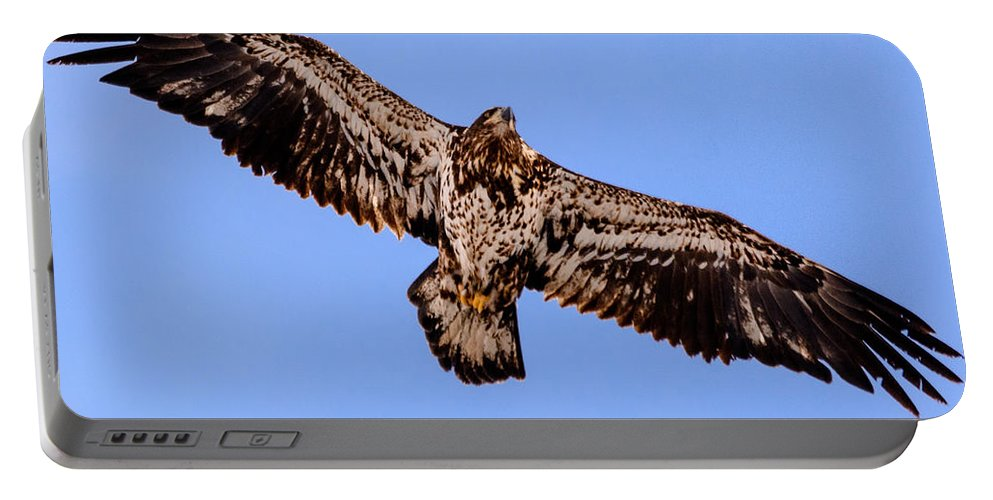 2015 Portable Battery Charger featuring the photograph Juvenile Bald Eagle by Randy Scherkenbach