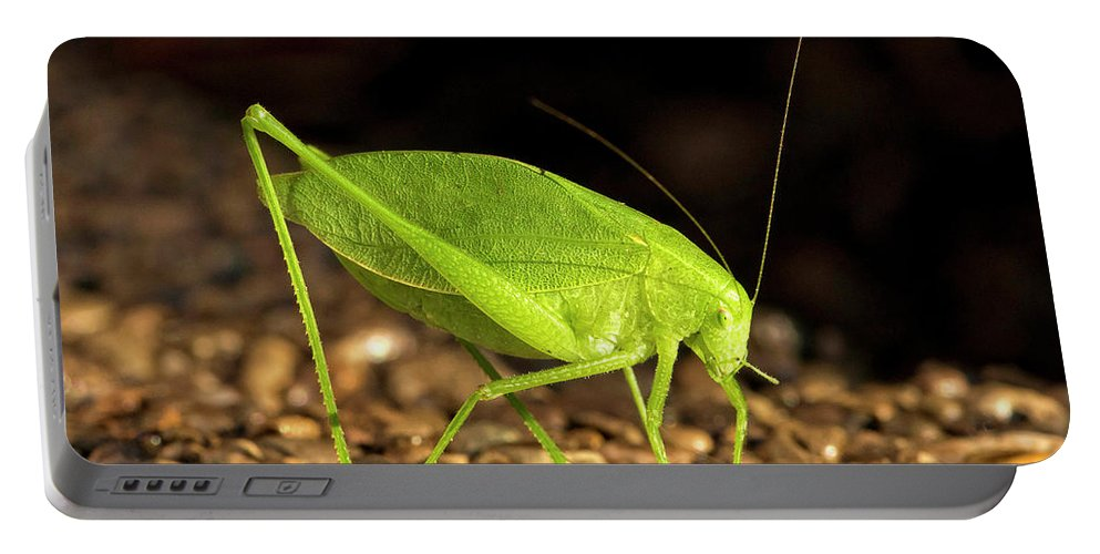 Bug Portable Battery Charger featuring the photograph Katydid Close Up Bug by Leon Winkowski