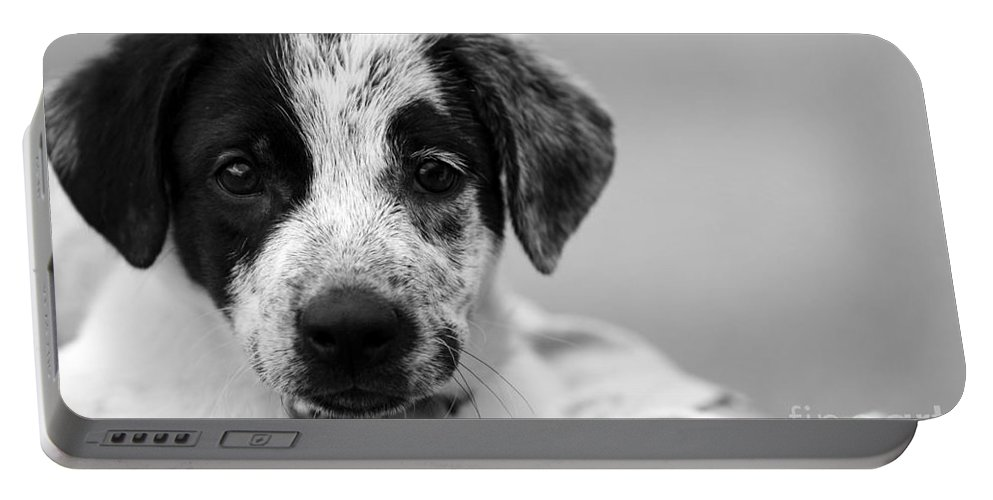 Dog Portable Battery Charger featuring the photograph Keep Me by Amanda Barcon