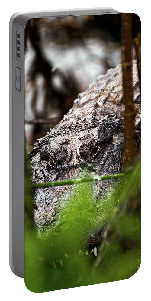 American Portable Battery Charger featuring the photograph Keeping An Eye Open by Christopher Holmes