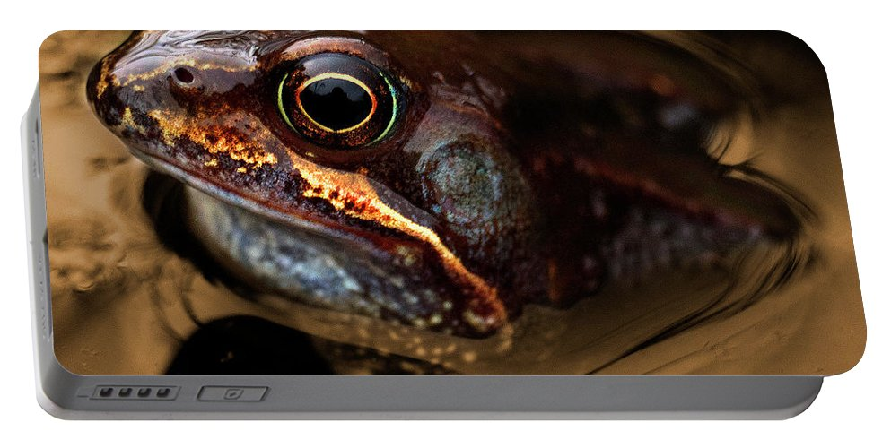 Frog Portable Battery Charger featuring the photograph Kermitt In Bronze by Rob Hawkins