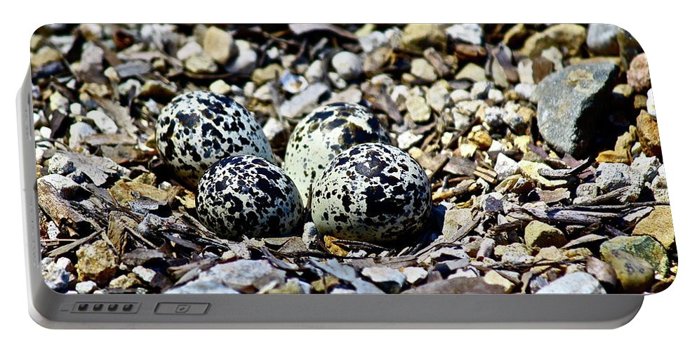 Birds Portable Battery Charger featuring the photograph Killdeer Nest by Diana Hatcher