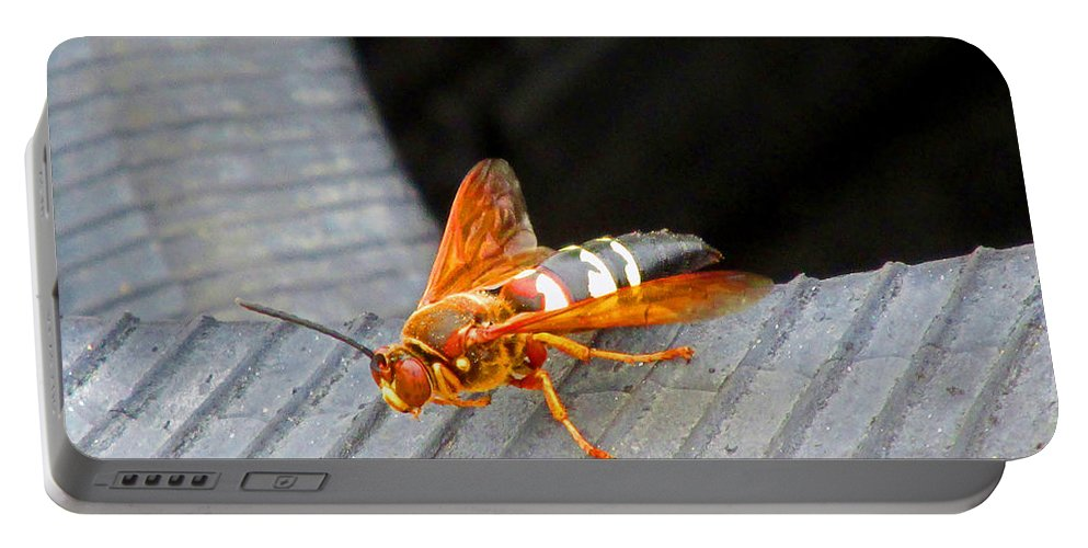 Cicada Killer Wasp Portable Battery Charger featuring the photograph Killer 2 by Don Baker