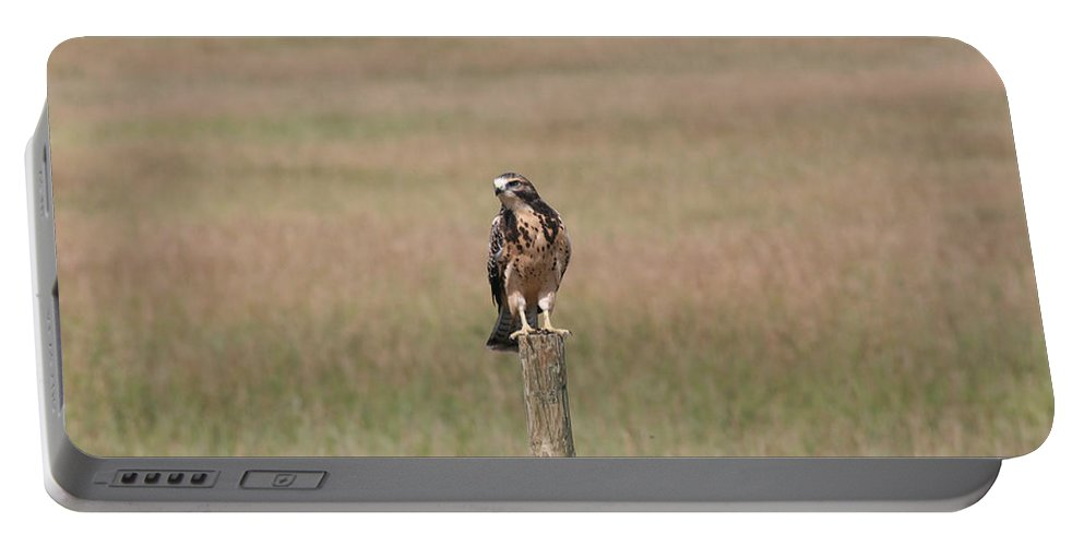 Hawk Wild Bird Nature Grass Fence Barbwire Flying Portable Battery Charger featuring the photograph King Of His Domain. by Andrea Lawrence