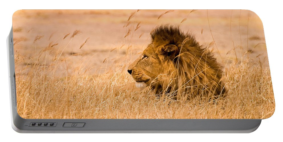 3scape Portable Battery Charger featuring the photograph King Of The Pride by Adam Romanowicz