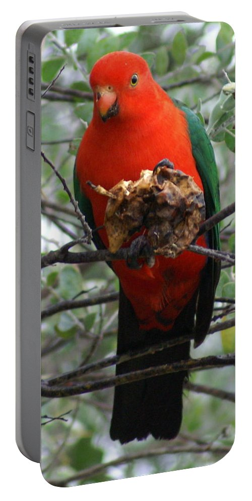 Parrot Portable Battery Charger featuring the photograph King Parrot by Brian Leverton