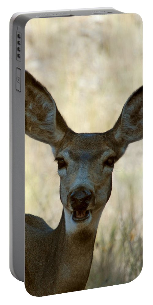 Deer Portable Battery Charger featuring the photograph Kiss Me by Donna Blackhall