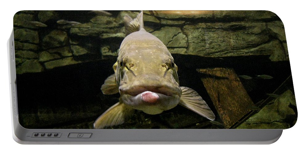 Fish Portable Battery Charger featuring the photograph Kiss Me You Fool by Donna Brown