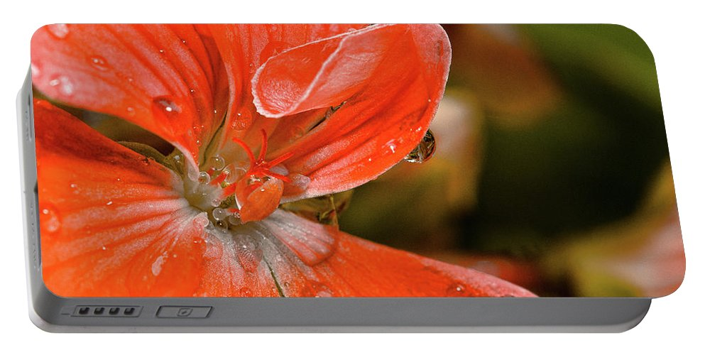 Flower Portable Battery Charger featuring the photograph Kissed By The Rain by Christopher Holmes