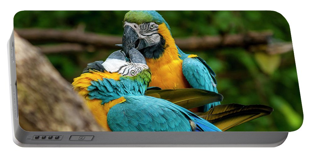Birds Portable Battery Charger featuring the photograph Kissing Parots by Daniel Murphy