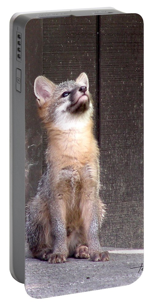 Kit Fox Portable Battery Charger featuring the photograph Kit Fox11 by Torie Tiffany
