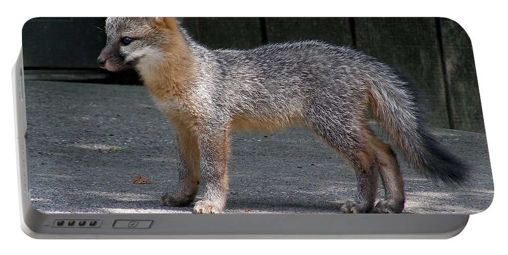 Kit Fox Portable Battery Charger featuring the photograph Kit Fox14 by Torie Tiffany