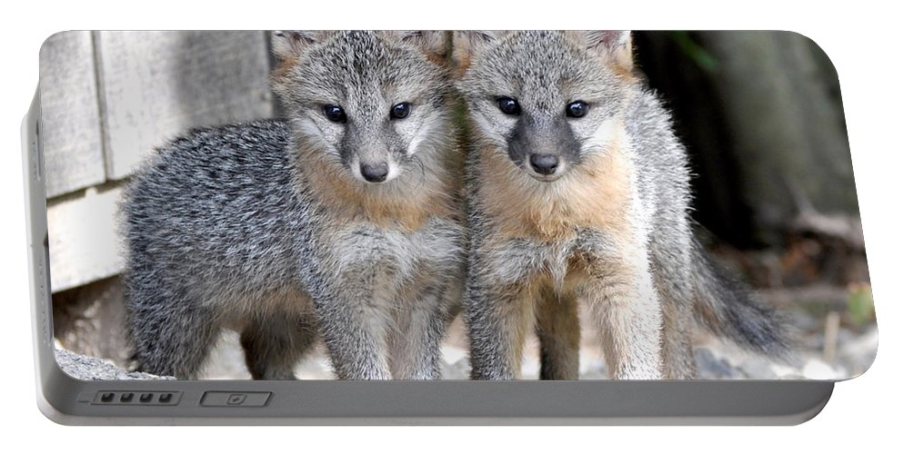 Kit Fox Portable Battery Charger featuring the photograph Kit Fox6 by Torie Tiffany